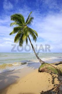 Leaning palm tree at Las Terrenas beach, Samana peninsula