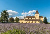 St. Georg church on Reichenau Island with flower meadow, Oberzell, Lake Constance, Germany