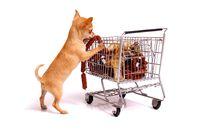 Chihuahua Welpe beim Einkaufen