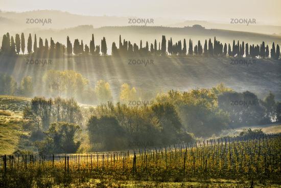 Chianti wine landscape near Bibbiano, Tuscany, Italy