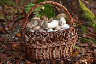 Korb mit frischen Pilzen im Wald