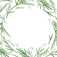 Green sprigs of dill levitate on a white background