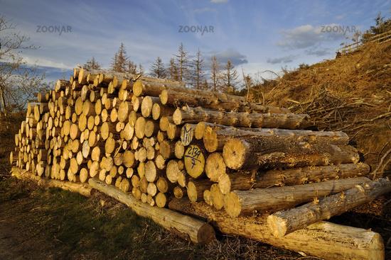 Felled trees, forest dieback, Eggegebirge, near Velmerstot, Horn-Bad Meinberg, Germany, Europe