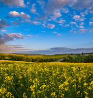 Spring sunset rapeseed yellow blooming fields view, blue sky with clouds in evening sunlight.