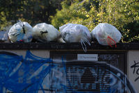Müllsäcke vor der Abholung