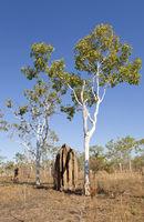 Termite construction, Australia