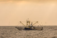 Fishing cutter fishing with a trawl on the North Sea