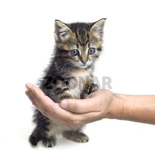 kitten and hand