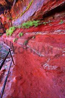 Emerald Pool Trail in Utah