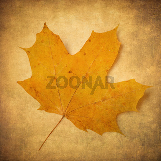 yellow maple leaf over grunge background