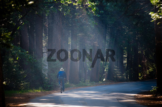 A man riding bicycle in the morning light