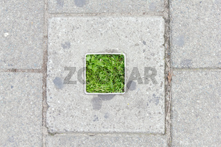 Concrete square vegetation. Urban gardening, environment and ecology concept.