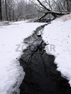 Winter Stream Scene in Illinois