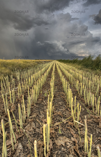 Stubble Field and Prarie Storm