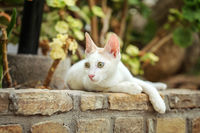 White stray cat resting on pavement curb made of bricks, garden trees and leaves in background.
