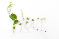 Collage of different microgreens on a white background.