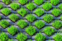 210610-225 Rasengittersteine Gras Rasen.jpg