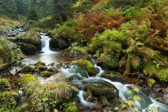 Wild river flowing in untouched green nature in autumn