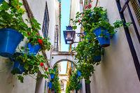 Calleja de las flores in Cordoba