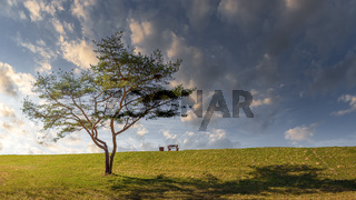 Landscape on the dyke with a bench and a tree