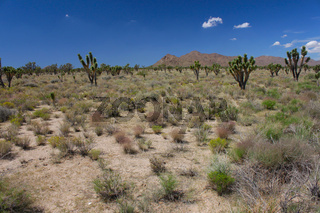 Mojave Desert - Southern California