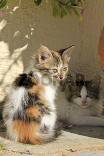 gefleckte Katzenkinder