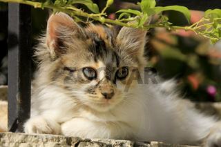griechisches Katzenkind