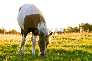 Horse in the morning light