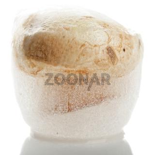 Mushroom in ice cube