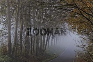 Landstraße im Herbst mit dichtem Nebel