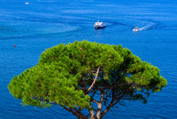Boats sailing on Mediterranean sea with a tree at foreground in Collioure, France