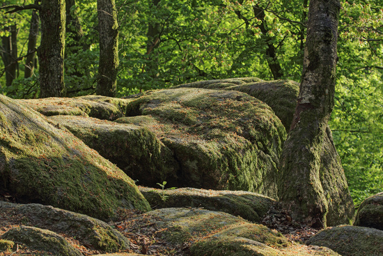 Linden stone natural monument