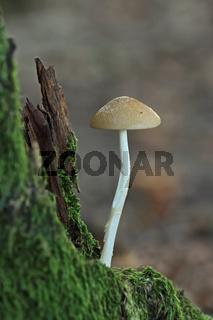 Pilz in einem Baumstumpf