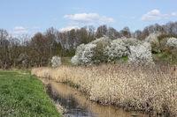 Springtime at the Tegeler Fließ in the north of Berlin