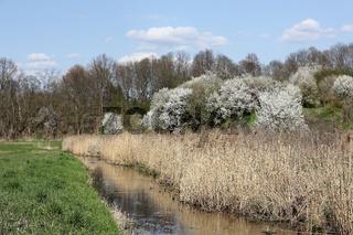 Frühling am Tegeler Fließ im Norden von Berlin