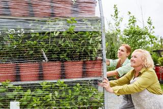 Gärtner schieben Etagenwagen mit Blumen Lieferung