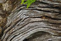 Wood grain, weathered wood