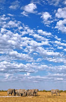 clouds over a herd of elephants, Etosha National Park, Namibia, (Loxodonta africana)