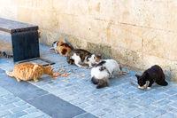 Street cats feed eat food