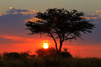 Scenic African savannah sunset with silhouetted tree and red sky