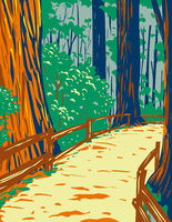Redwood Trees in Muir Woods National Monument in Golden Gate National Recreation Area San Francisco California United States of America WPA Poster Art
