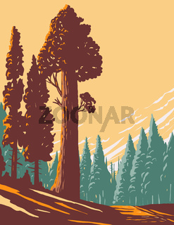 General Grant Tree Trail with the Largest Giant Sequoia in the General Grant Grove Section of Kings Canyon National Park in California WPA Poster Art