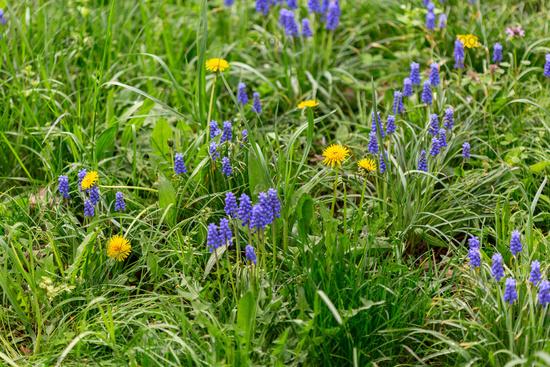 Spring meadow flowers.