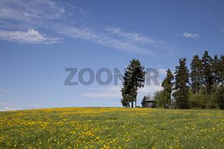 Wiese mit Löwenzahn und Aussichtspunkt bei Bad Steben
