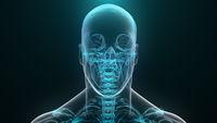 Human xray. 3D render