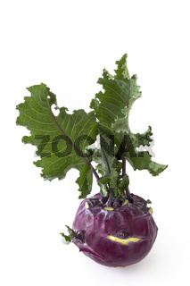 Kohlrabi - brassica oleracea gongylodes