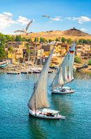 Birds over sailboats