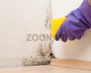 Beseitigung von Schimmelpilzen in Innenräumen