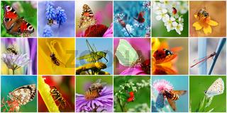 Insekten Collage