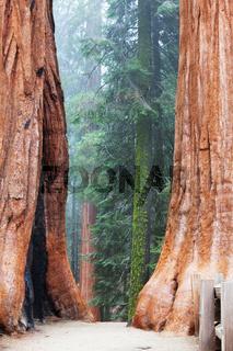 Sequoya